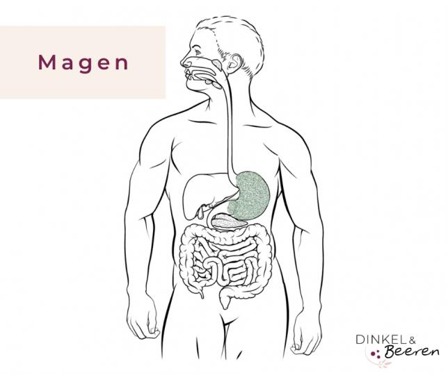 Verdauung Magen